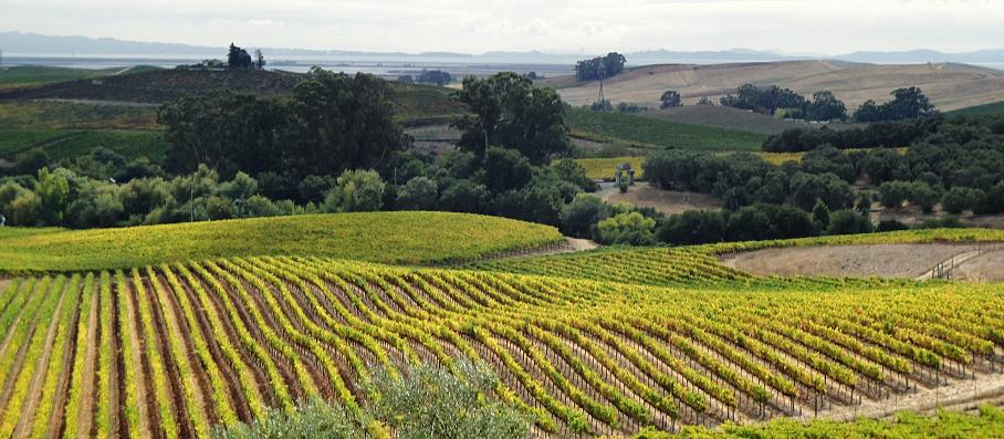 Sonoma and Napa Wine Tours