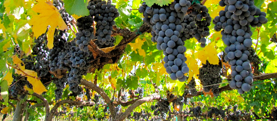 Sonoma and Napa Wine Tours